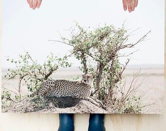 Cheetah. Colour photography print, Large print, Wildlife photography