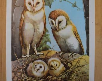 1950s Owl Illustration - Farmyard Friends
