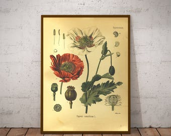 Two Vintage Botany Prints - Poppy & Velvet Plant - 1887 Medicinal Plants Encyclopedia - Printable Art - Instant Download