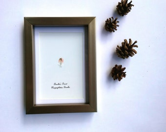 Custom Framed Feather, Natural Feather Gift, Pet Gift, Housewarming Gift, Anniversary Gift