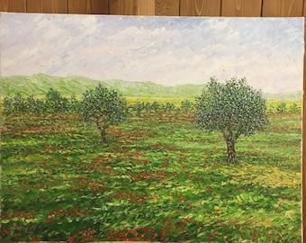 Olive Trees Of Puglia