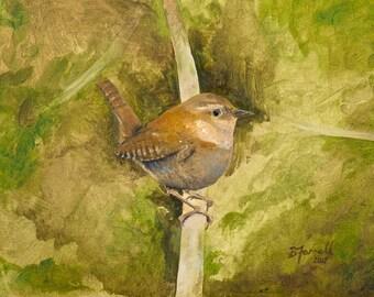 Bird Art Print Wren Oil Study (A4 Digital print)
