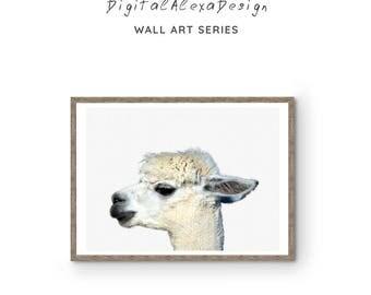 Alpaca Print, Wall Art, Alpaca Photo, Framed Art, Alpaca Printable, Wall Art Decor, Alpaca Poster, Wall Painting, Alpaca Nursery Wall Decor
