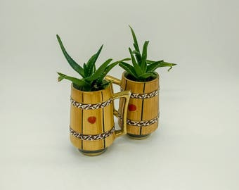 Decorative Vintage jars with aloe