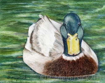 Cambridge Duck Art Print