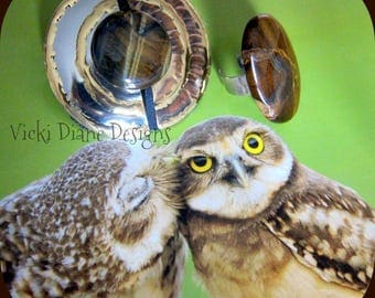 Owls keep an eye on the Tigers Eye
