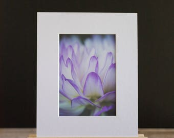 Fine Art Macro 5x7 Matted Print - Dahlia Flames