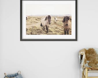 Color Horse Photograph   Icelandic Horses in Landscape Print   Equine Photography   Physical Print