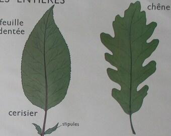 Rossignol school poster: leaf / stems