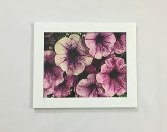 Flower Print Floral Photography Pink Wall Art 8x10 Print 11x14 Print 16x20 Print Flower Petals Art Feminine Petunia Leaves Housewarming Gift