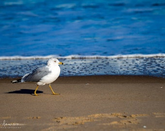 Seagull Photo Print, Beach Wall Art Decor, Bird Photography