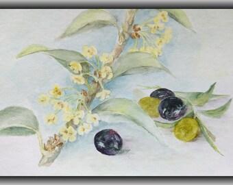 Printable art, watercolor by Tsvetilena Bochukova,digital print,wall decor,instant download, Olives & blossom , Flower print,Home decor