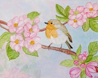 Bird Apple flowers watercolor image the Robin Robin