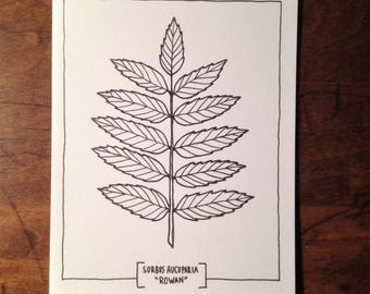 Botanical Illustration Get Well Soon Card * Rowan Branch * Adult Coloring Meditation Art