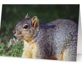 Squirrel Blank Greetings ...
