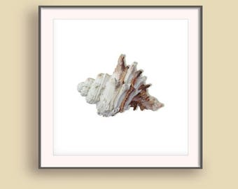 Beach 2017 art print, Coastal wall prints, Summer Wall Art 2017, Vacation art prints, Summer Wall prints, Seashell prints
