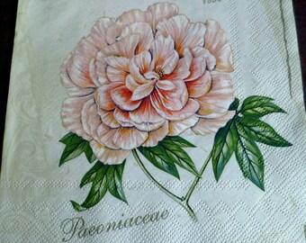 5 napkins paper magnolia, Paeonia paper towel