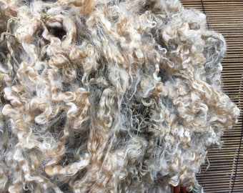 Teeswater from UK--Raw fleece 8-10 inch locks 6oz