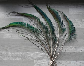 Set of 10 natural Peacock sword feathers