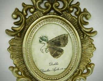 Fairy naturalized setting