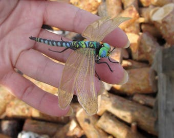 Brooch Dragonfly Aeschna viridis Big Green Dragonfly Green Dragonfly Natural Realistic of velvet clay polymer clay Green insect