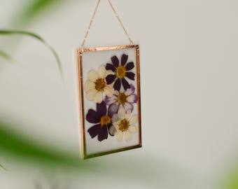 """Real pressed flower wall hanging   cosmos   4x6"""" glass with copper edging   botanical home decor"""