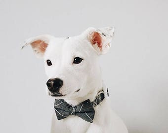 Wedding Dog Collar, Modern Grey Puppy Dog Collar, Trendy Grey Cat Bow Collar, Rose Gold Hardware, Classy Fancy Dog Bow Collar, Kitten Bow