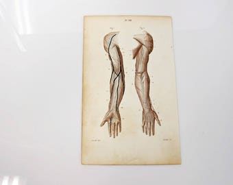 1846 Anatomy Muscles Arm Medicine Antique Book Plate  4 1/8 x 7 - Color Chromolithograph