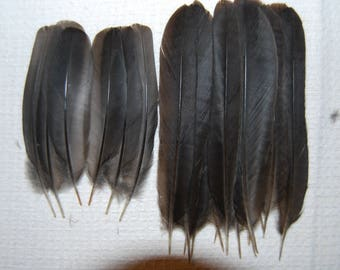 ME3 - Lot/Set of feathers/plumes natural of merle 7-10cms X10paires (20plumes) (ME3)