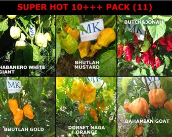 SUPER HOT 10 ++, 6 chilli peppers of the World 60 seeds, pack (11)