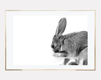 Rabbit Print, Bunny Print, Woodland Nursery Decor, rabbit printable, bunny printable, animal photography prints, downloadable prints