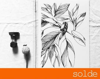 Clearance sale - A4 Edition botanical print limited and numbered - drawing Illustration handmade - Ctenanthe - monotyledone