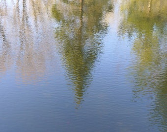 Reflection on water. Tree and water. Nature photography.