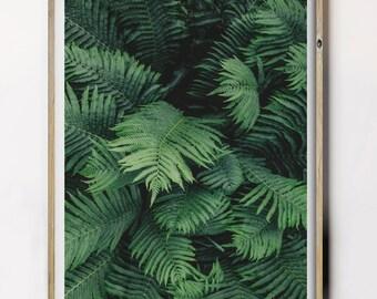 Fern Wall Hanging, Fern Poster, Fern Wall Decor, Green Fern Printable, Fern Wall Decor, Fern Botanical Photo, Fern Digital Print,
