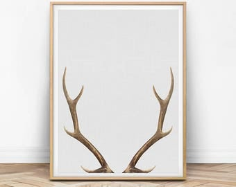 Deer Antler Print, Deer Wall Art, Antler Print, Deer Photo, Deer Antler