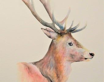 """Red Deer 12"""" x 10"""" Original watercolour painting"""