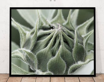 bud, photography art, home decor, botanical print, bud print, close up bud, Bud Print, Green Bud