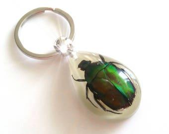 Beetles in resin, ladybug, Labradoritkäfer, pendant, key chain