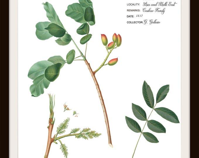 Instant Download, Printable Wall set of two, Field Label Botanical, Pistachio, Kitchen Print, Farmhouse Style, Garden Print, Plant Print