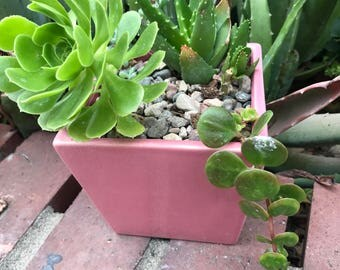 Pink square Ceramic Pot.Succulent Arrangement Planter.Garden Decor.Tooth Aloe.Aeonium Arboreum.YardDecor.House Planter.Home Planter