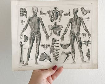 Antique 1849 human anatomy medical engraving. In good condition, very beautiful!