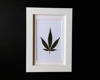 "Cannabis Leaf in White Frame (4"" x 6"")"