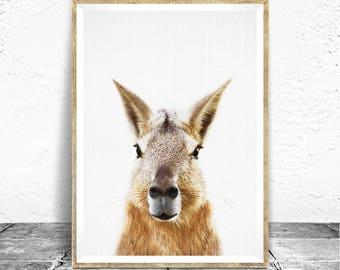 Mara Print, Nursery and Kids Room Art, Peekaboo Animal, Rabbit, Nursery Decor, Kids Room Decor, Neutral Nursery, Peekaboo, Patagonia Animals