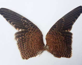 RESERVED! Pair of bird wings large birdwing taxidermy Millinery feathers feather fly tying art deco victorian edwardian wing birds