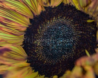 Sunflower Wall Art Portrait