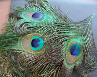 the 2 Peacock lyre, 5cms eye quality.