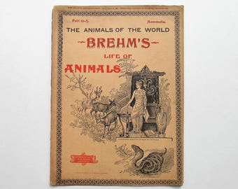 Antique 1896 Brehm's Life of Animals, Part 16-A, Illustrated, 1890's Booklet, Marquis & Company, The Beasts of Prey: The Bear Family