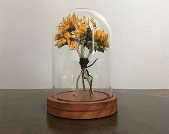 Real hand dried sunflowers in glass dome