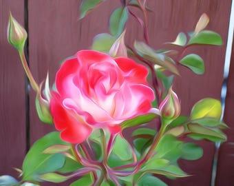 Pink Rose - Digitally Enhanced 8x10 Photo Print -