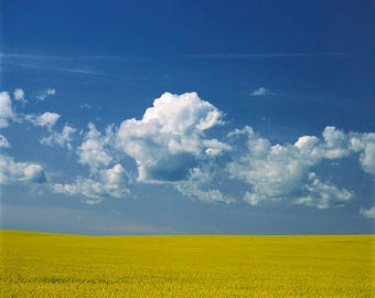 Canola Field , blue sky and cumulus at Rocanville, Saskatchewan